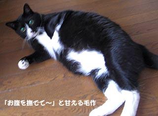写真 愛猫の毛作