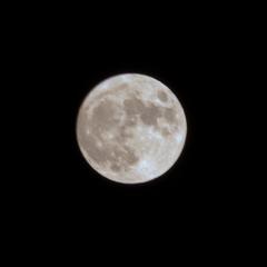 写真 仲秋の名月
